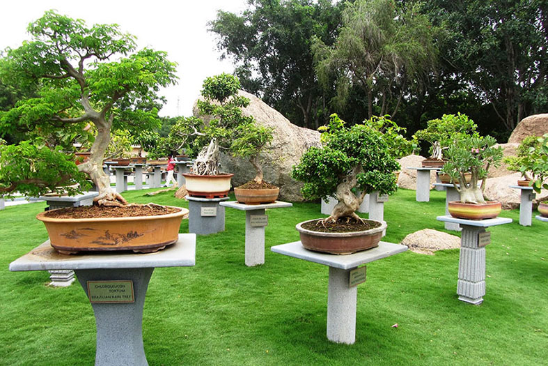 bonsai-garden-in-ramoji-film-city